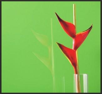 Ярко-зеленый REF-1164